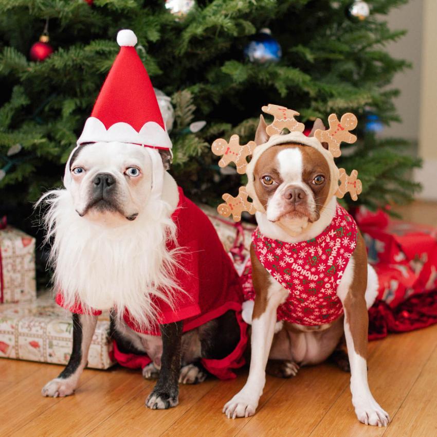 https://cf.ltkcdn.net/dogs/images/slide/245712-850x850-4-christmas-dog-pictures.jpg