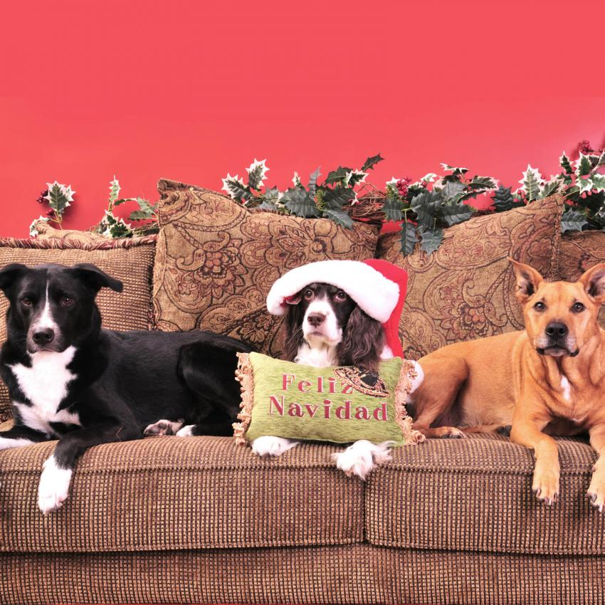 https://cf.ltkcdn.net/dogs/images/slide/245723-850x850-1-christmas-dog-pictures.jpg