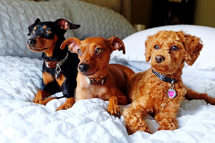 https://cf.ltkcdn.net/dogs/images/slide/248131-850x567-three-dogs-with-designer-collars.jpg