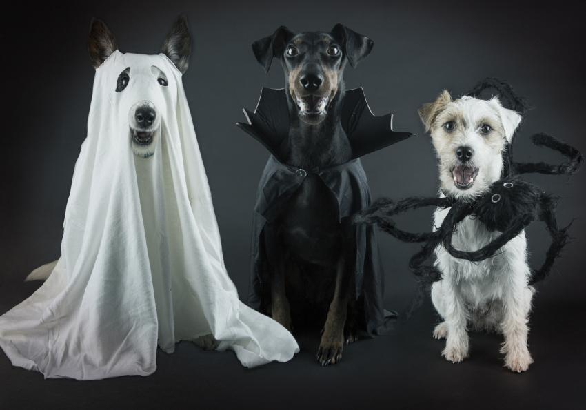 https://cf.ltkcdn.net/dogs/images/slide/252779-850x595-1_Halloween_dogs.jpg