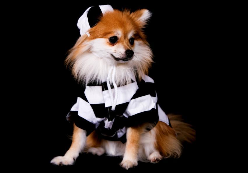 https://cf.ltkcdn.net/dogs/images/slide/252783-850x595-9_Chihuahua_Jail_bird.jpg