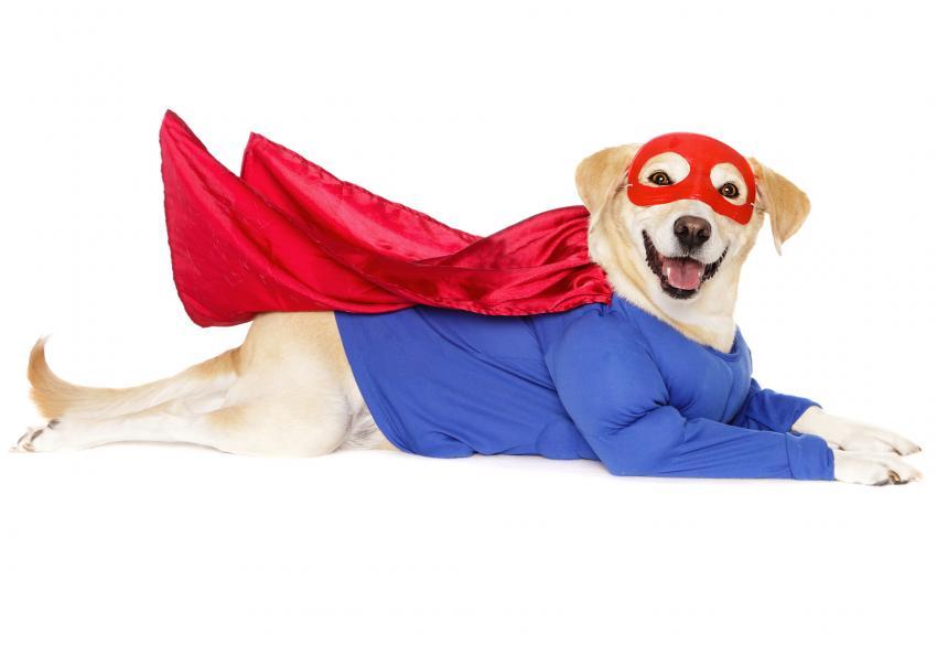 https://cf.ltkcdn.net/dogs/images/slide/252786-850x595-13_Halloween_dog_superman.jpg