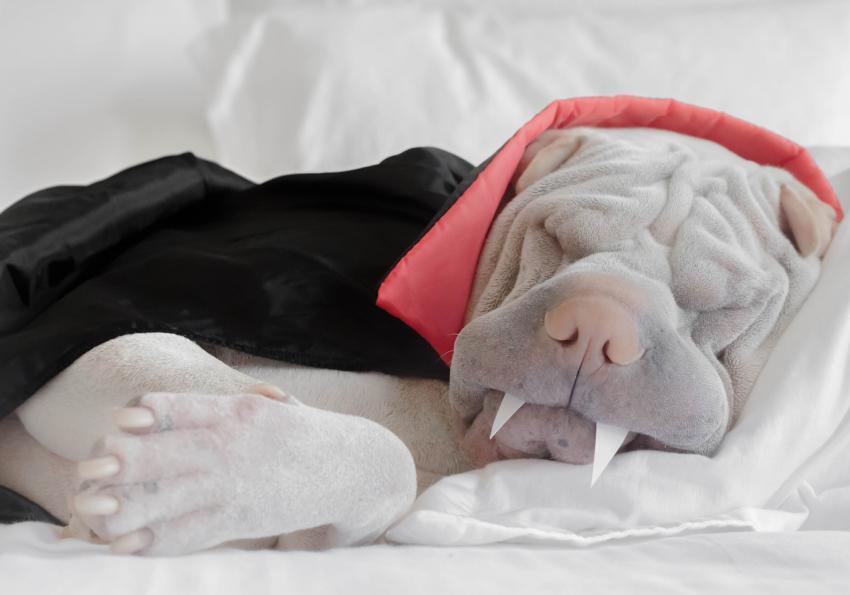 https://cf.ltkcdn.net/dogs/images/slide/252787-850x595-14_Halloween_dog_vampire.jpg