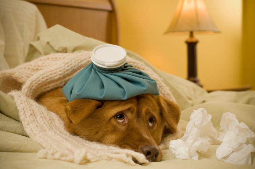 https://cf.ltkcdn.net/dogs/images/slide/90269-850x563-The-canine-patient.jpg
