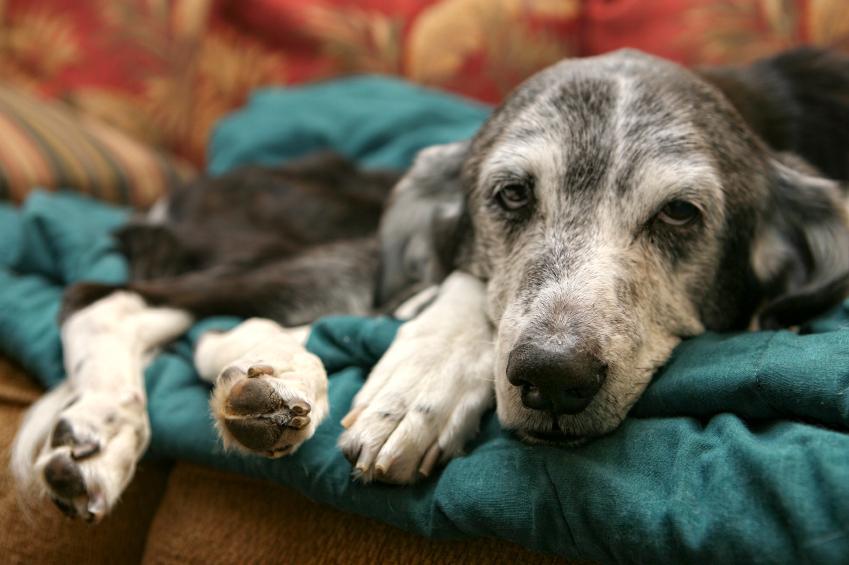 https://cf.ltkcdn.net/dogs/images/slide/90276-849x565-Very-sick-pet.jpg