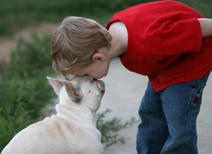 https://cf.ltkcdn.net/dogs/images/slide/90303-811x592-French-B-2.jpg