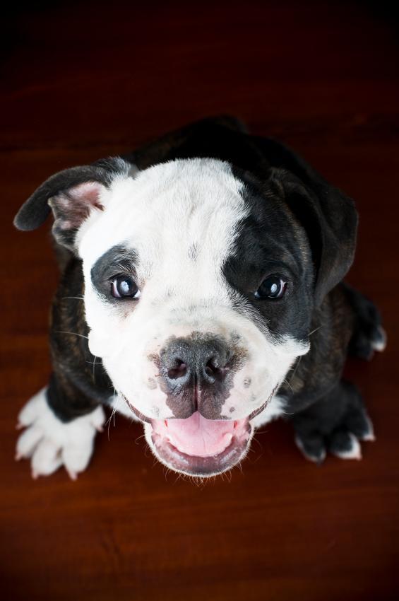 https://cf.ltkcdn.net/dogs/images/slide/90318-565x850-Little-yapper.jpg