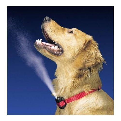 https://cf.ltkcdn.net/dogs/images/slide/90322-500x500-Citronella-collar.jpg