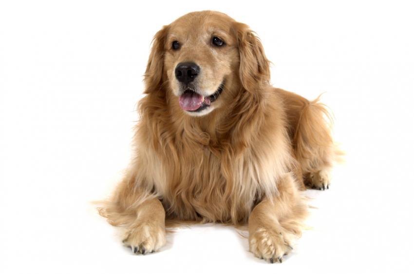 https://cf.ltkcdn.net/dogs/images/slide/90341-850x562-dog-heartworm-symptoms-2.jpg