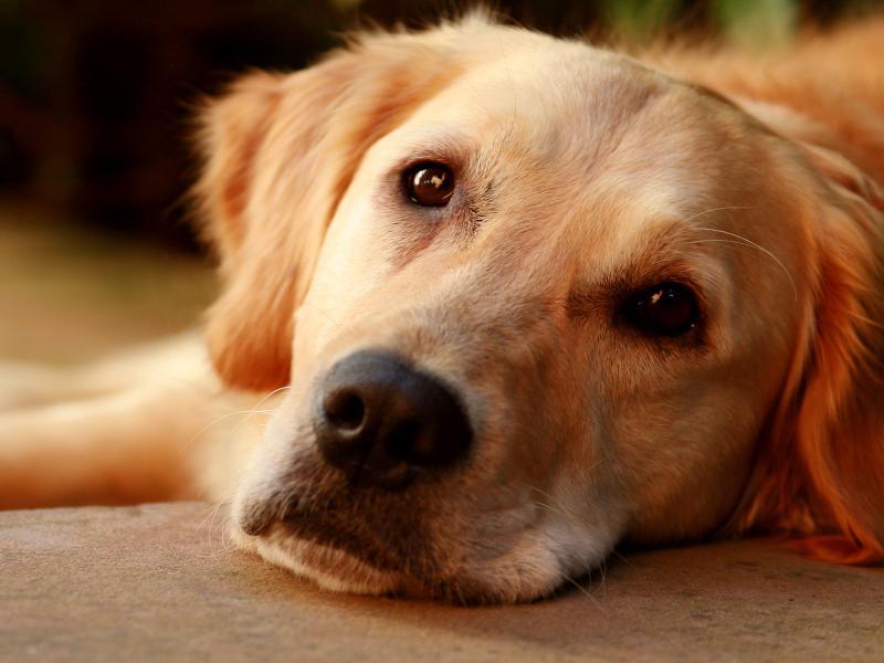 https://cf.ltkcdn.net/dogs/images/slide/90343-800x600-dog-heartworm-symptoms-4.jpg