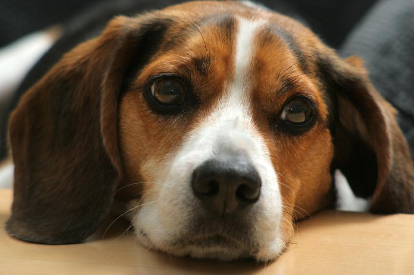 https://cf.ltkcdn.net/dogs/images/slide/90345-849x565-dog-heartworm-symptoms10.jpg