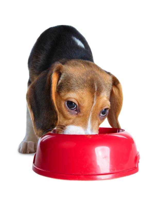 https://cf.ltkcdn.net/dogs/images/slide/90346-606x792-dog-heartworm-symptoms-9.jpg