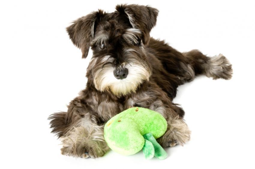 https://cf.ltkcdn.net/dogs/images/slide/90347-850x563-dog-heartworm-symptoms-5.jpg