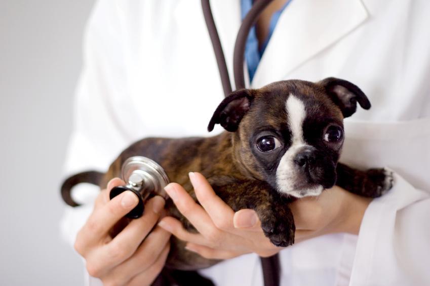 https://cf.ltkcdn.net/dogs/images/slide/90348-849x565-dog-heartworm-symptoms-1.jpg