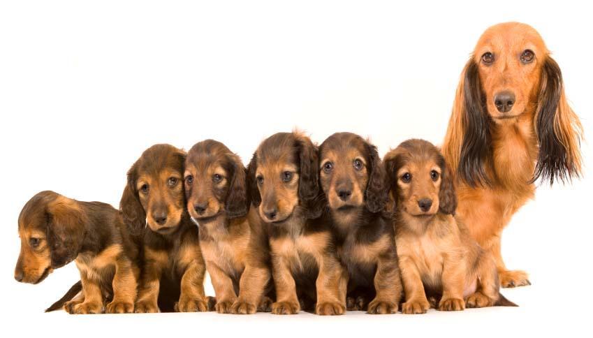 https://cf.ltkcdn.net/dogs/images/slide/90491-849x484-Mother_And_Pups.jpg