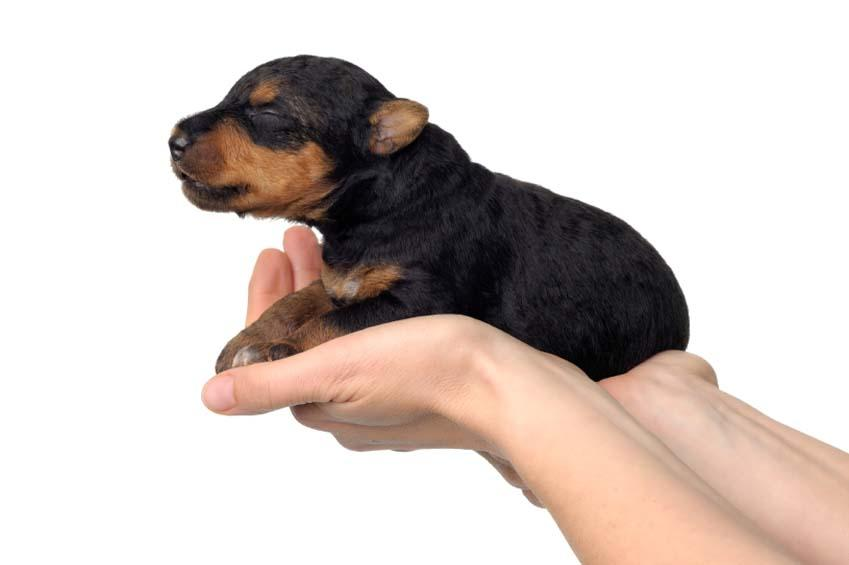 https://cf.ltkcdn.net/dogs/images/slide/90495-849x565-Puppy_Delivery.jpg