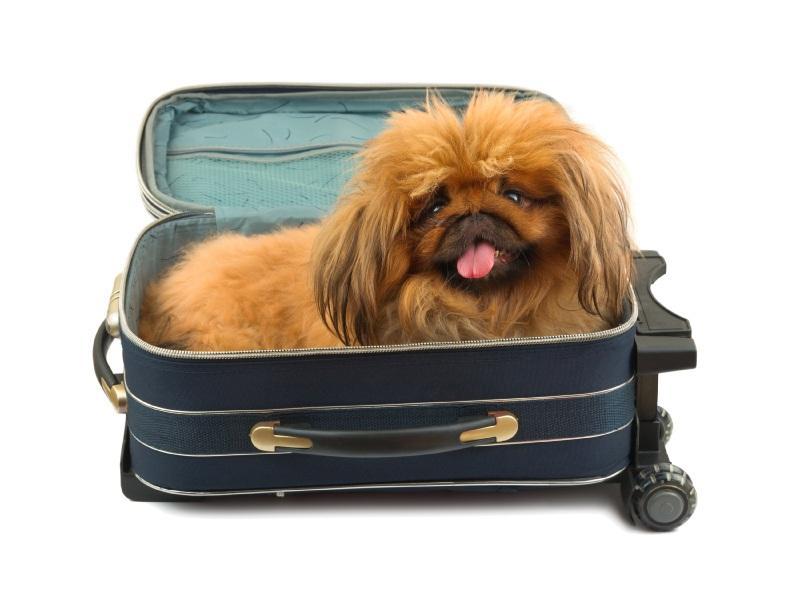 https://cf.ltkcdn.net/dogs/images/slide/90518-800x600-zigeuner-dog-name.jpg