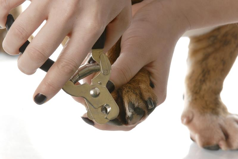 Trimming Dog Nails | LoveToKnow