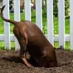 Reasons Dogs Dig and Tips to Stop It