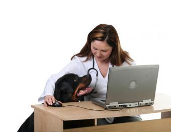https://cf.ltkcdn.net/dogs/images/slide/137492-789x608r1-Rottie-fact-5.jpg