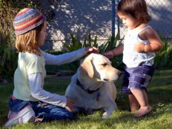 Finding the Right Dog for Your Home