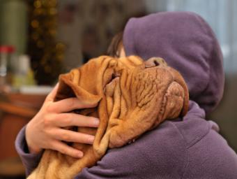 Bordeaux hugging his owner