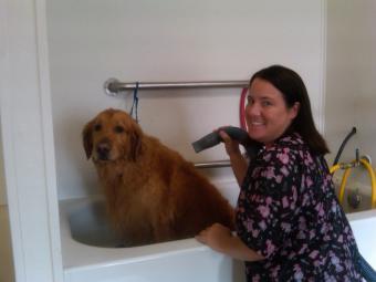 Kelly's partner and sister, Becky Sutton, grooming Hank (Golden Retriever).