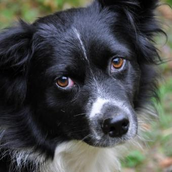 Symptoms and Common Triggers of Depression in Dogs