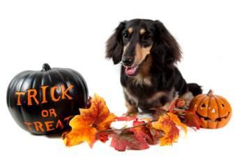 Keep Your Dog Safe this Halloween