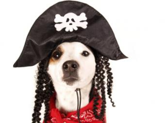 Should Fido Dress Up for Halloween?