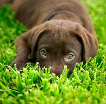 Puppy Names and Meanings