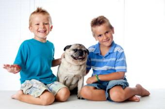 Two brothers and their Pug