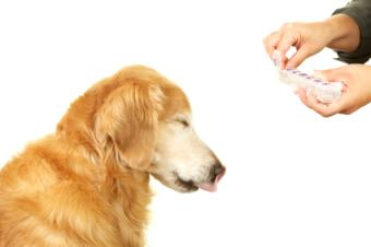 Giving dog his daily pill