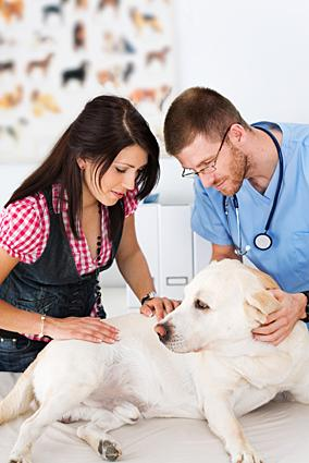 Canine Stomach Cancer