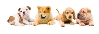 Puppies from four different breeds