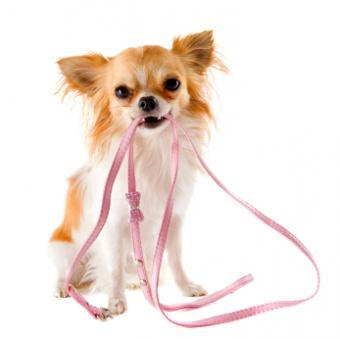 How to Select the Perfect Leash