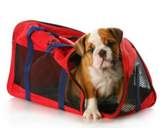 Transport Dog Crate Options and Tips