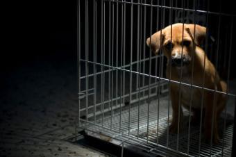 https://cf.ltkcdn.net/dogs/images/slide/179252-850x565-puppy-in-cage.jpg