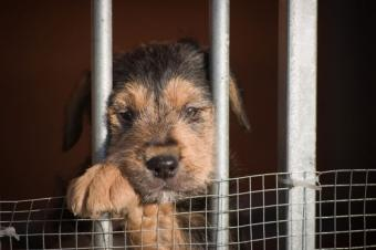 Facts About Puppy Mills