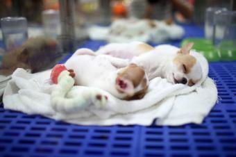 https://cf.ltkcdn.net/dogs/images/slide/179255-850x565-puppies-napping.jpg
