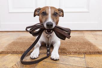 https://cf.ltkcdn.net/dogs/images/slide/187966-850x566-dog-ready-for-walk.jpg