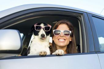https://cf.ltkcdn.net/dogs/images/slide/187968-850x566-traveling-dog-and-owner.jpg