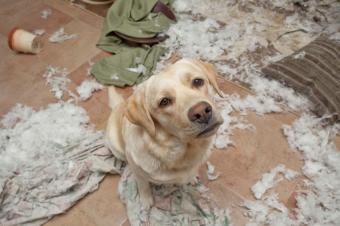 https://cf.ltkcdn.net/dogs/images/slide/187974-850x566-dog-in-trouble.jpg