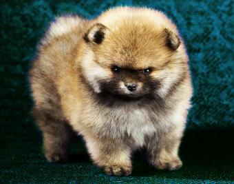 Cute Puppy Gallery