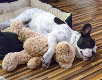 https://cf.ltkcdn.net/dogs/images/slide/188874-850x668-french-bull-dog.jpg