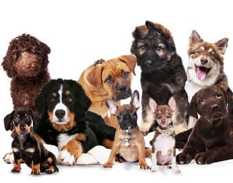https://cf.ltkcdn.net/dogs/images/slide/188887-850x668-puppy-group.jpg