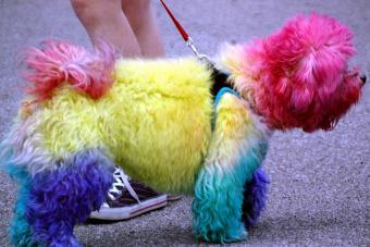 https://cf.ltkcdn.net/dogs/images/slide/190024-850x567-Rainbow-Dog.jpg