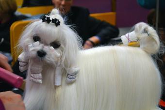 https://cf.ltkcdn.net/dogs/images/slide/190025-850x567-dog-getting-hair-done.jpg