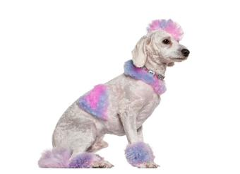 https://cf.ltkcdn.net/dogs/images/slide/190029-850x615-pink-and-lavender-dog.jpg