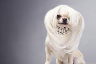 https://cf.ltkcdn.net/dogs/images/slide/190032-850x567-dog-with-long-hair.jpg